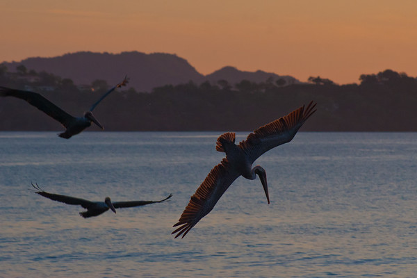 Costa Rica 3: Sugar Beach and Pelicans
