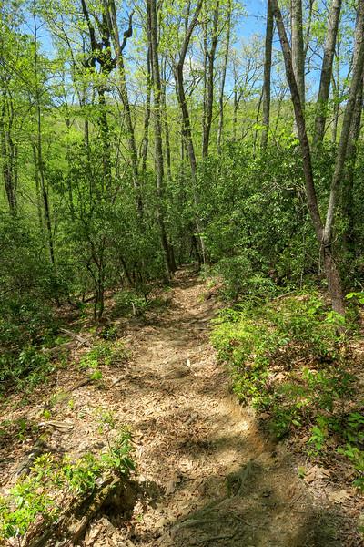 Laurel Creek Trail -- 2,900'