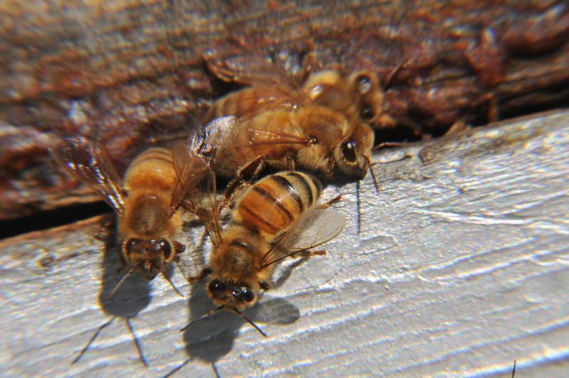 Bee shadows .jpg