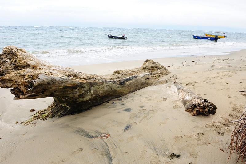 costa_rica_log_on_beach.jpg