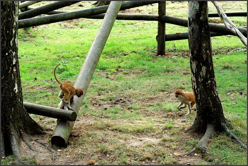 Opièky zlobily i po tìch nìkolika hodinách s úplnì stejným nasazením