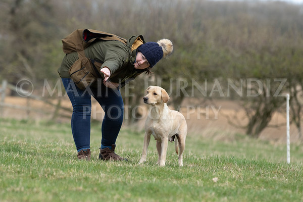 GUNDOG TRAINING NOVICE MARCH 2019