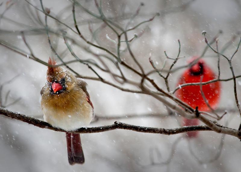 SnowyCouple.jpg