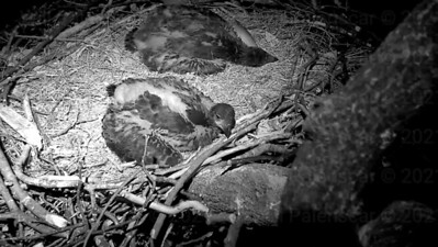 2016-04-27 Eaglets Freedom and Justice