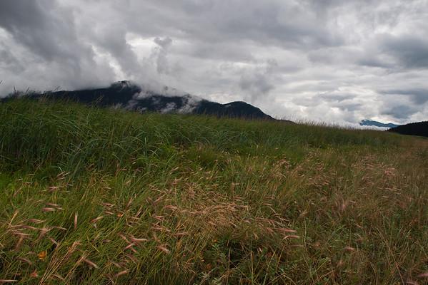 August Grass