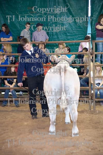 2011 Klein ISD Steer Show Class 2