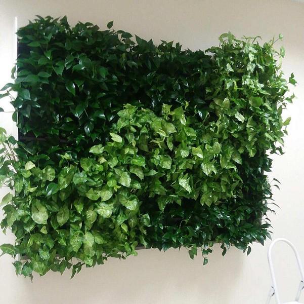 plantwallpattern.jpg