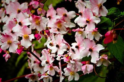 S.American Wildflowers &  Flora