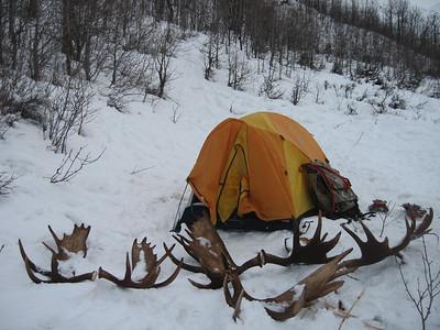 Antler Hunting