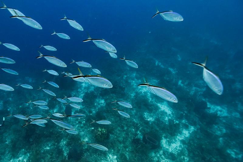 Fish underwater, Belize Barrier Reef, Belize