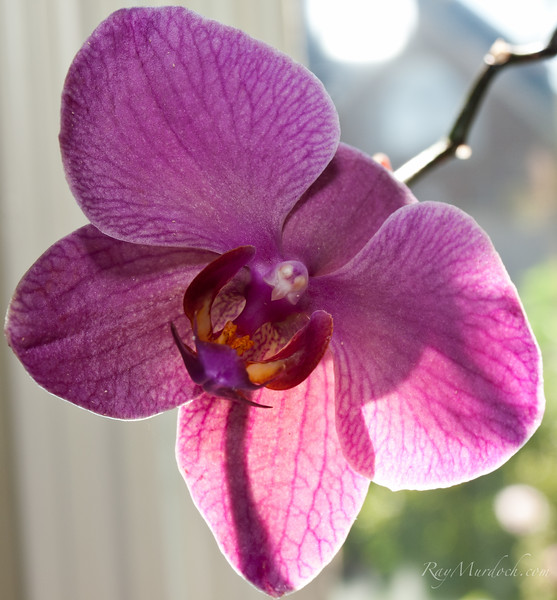 Could not believe how many shots it took to get this Orchid.