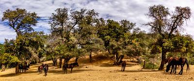 Horses of Tir Na Nog at Rancho Samataguma - Apr 28, 2019
