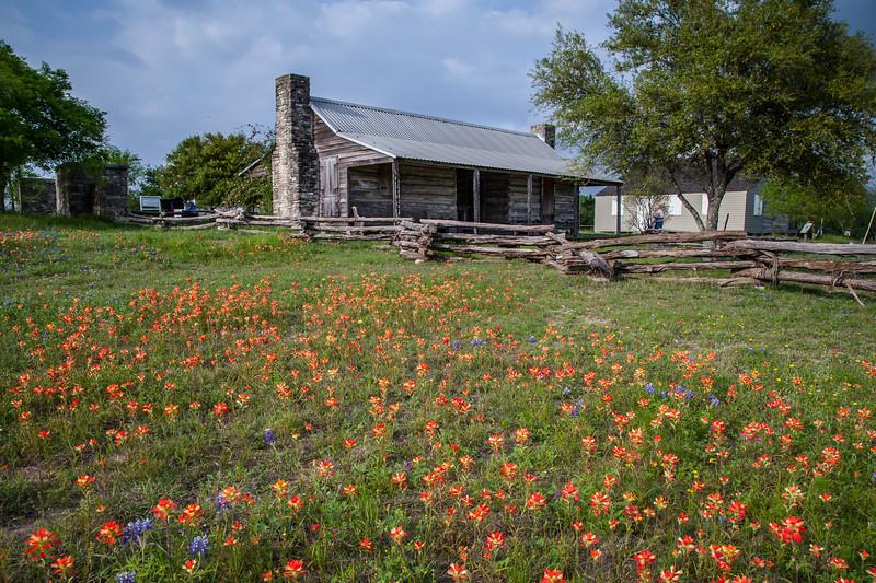 2015_4_3 Texas Wildflowers-8138-2.jpg