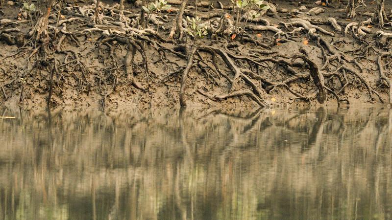 Mangrove-Roots-Sundarbans.jpg