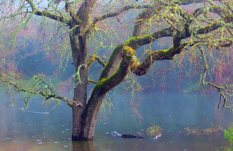 Damp oak