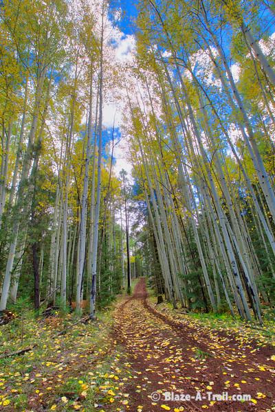 White Mountains, AZ Fall Colors 2018