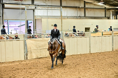 Select Hunter Under Saddle
