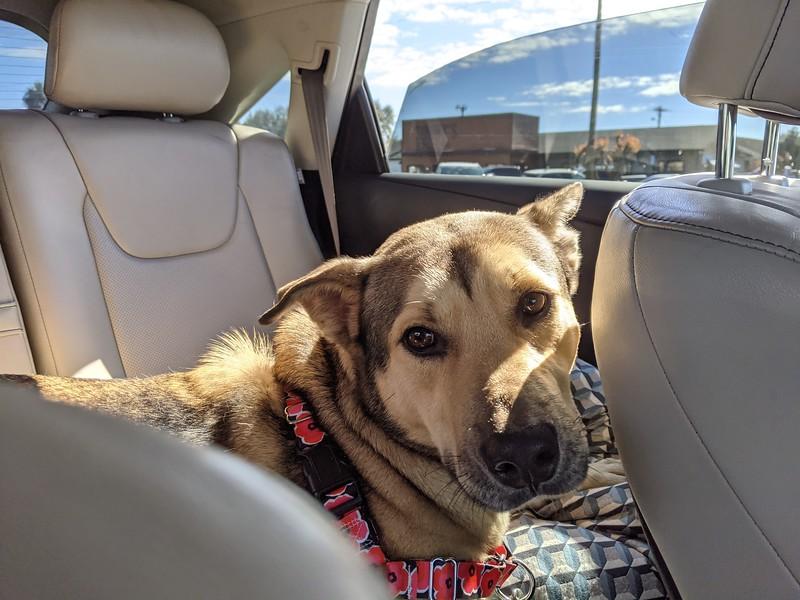 1-Finn, adopted 12/27/2020