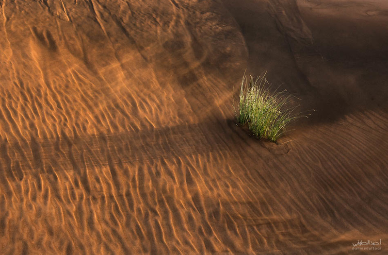Oman Desert (12).jpg