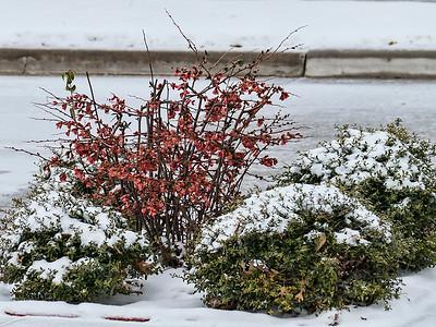 Snow - 2015