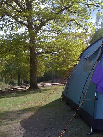 Hollands Wood May 2010