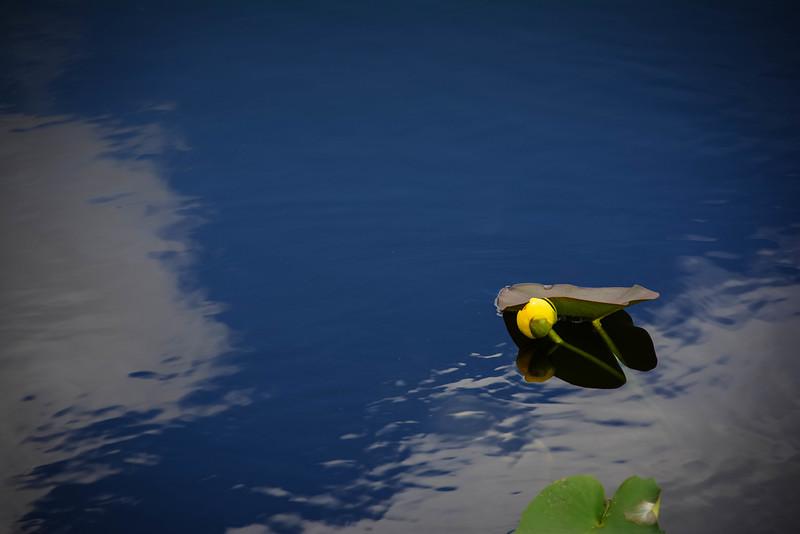 Everglades-3.jpg
