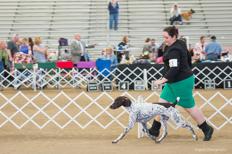 2019 Malibu Kennel Club-0031.jpg