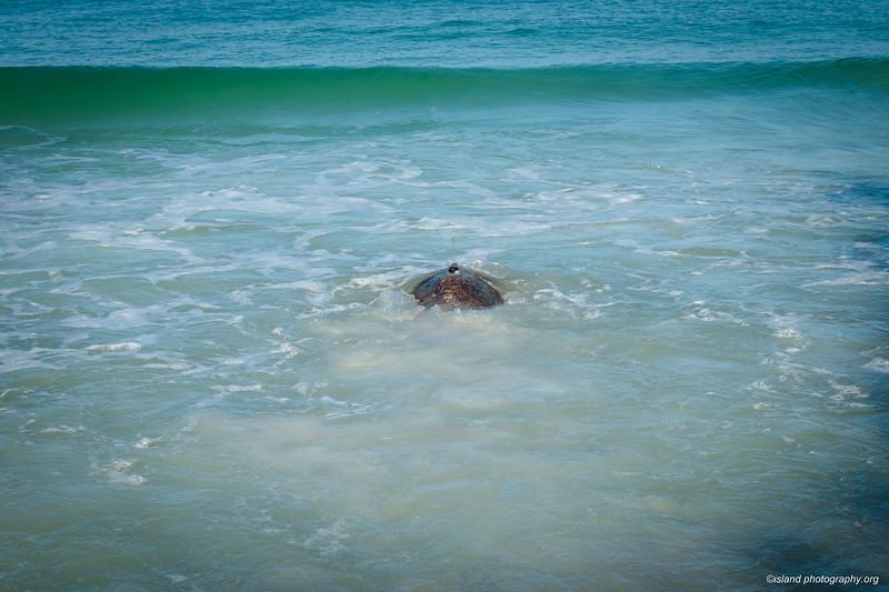 Island Photography_075.jpg