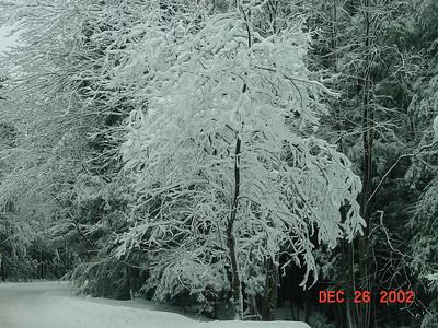 Canaan Valley, WV - X-mas 2002