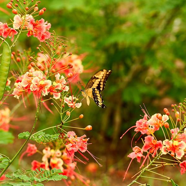 Butterfly ig.jpg