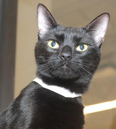 Odd Cat Sanctuary - PetSmart