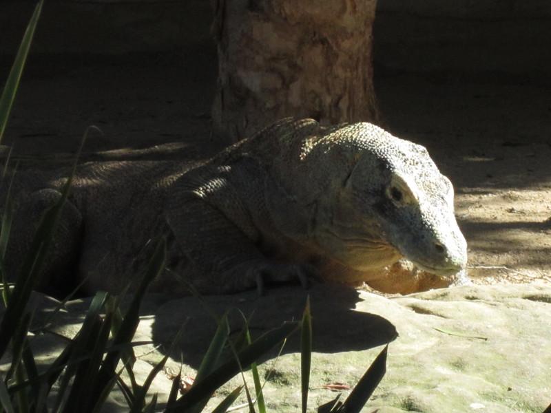 Sydney - Sydeny Zoo-13.JPG