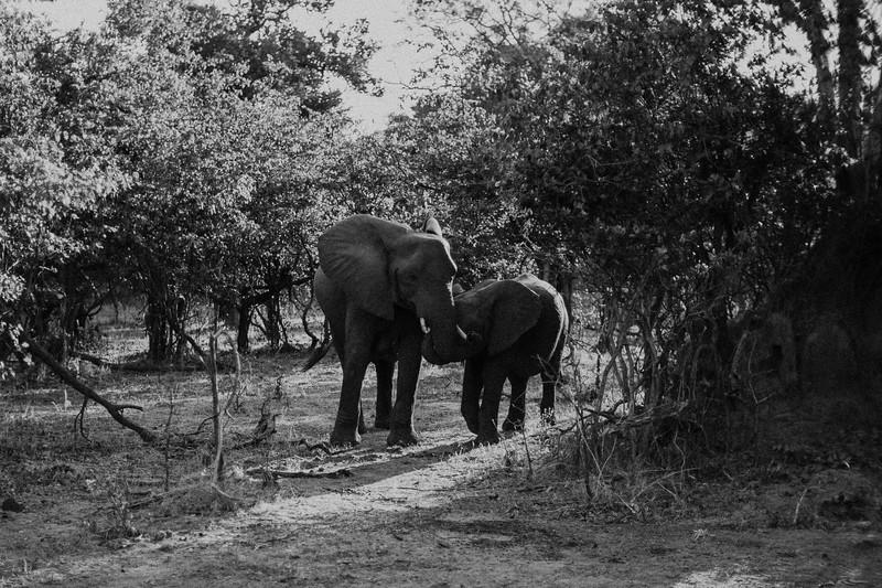 2019_06_24_Global_Malawi_ASJ_D01_Safari-35.jpg