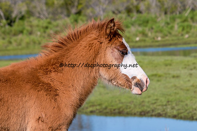 Kimmee Sue's Filly