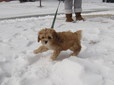 Olive's First Snow - February 2009