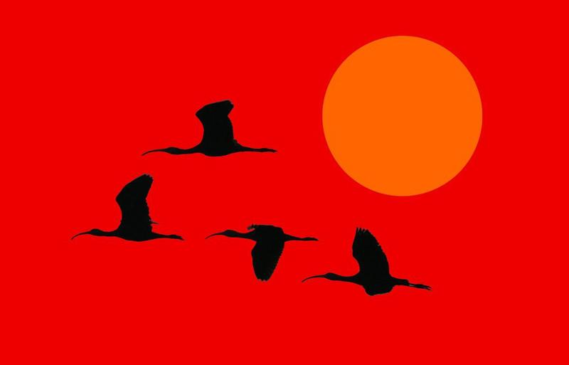 This started out as a badly underexposed dawn photo of Ibises on a gray day. I gave up on the original photo and turned it into a poster by altering colors and adding a fake sun
