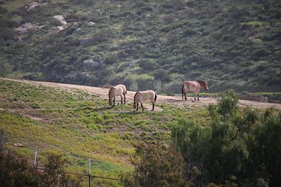 SD Wild Animal Park 2019-04-01