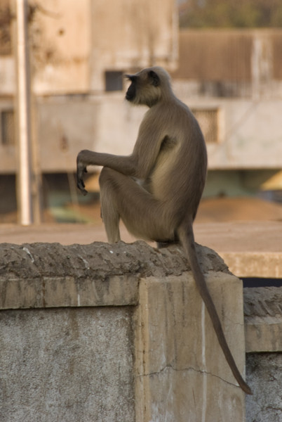Monkey on the wall
