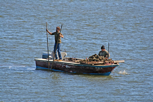 Oystering in Apalachicola Bay