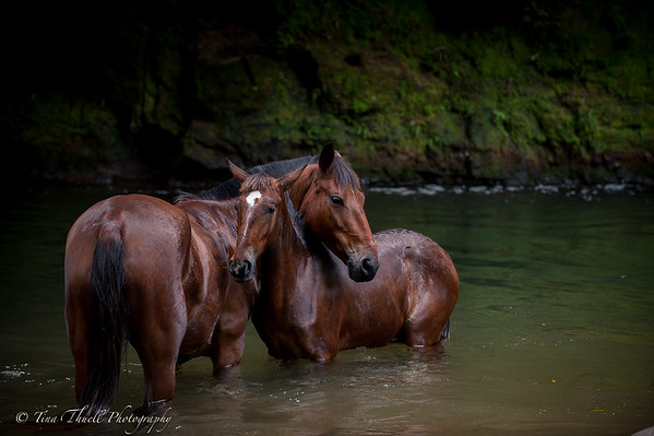 Costa Rica,  Wild LIfe and the horses of Leaves and Lizards,  Cabin retreat in La Fortuna, Costa Rica :  Contact  me for purchasing images.