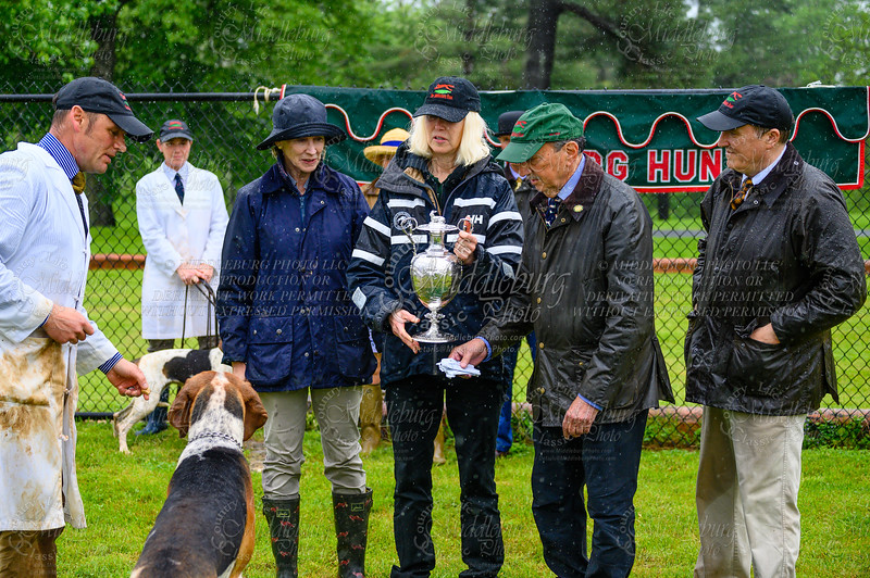 Middleburg Hunt Puppy Show