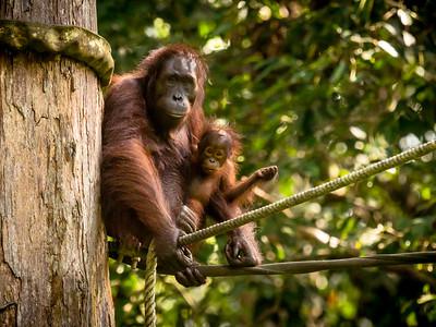 2019 - Borneo