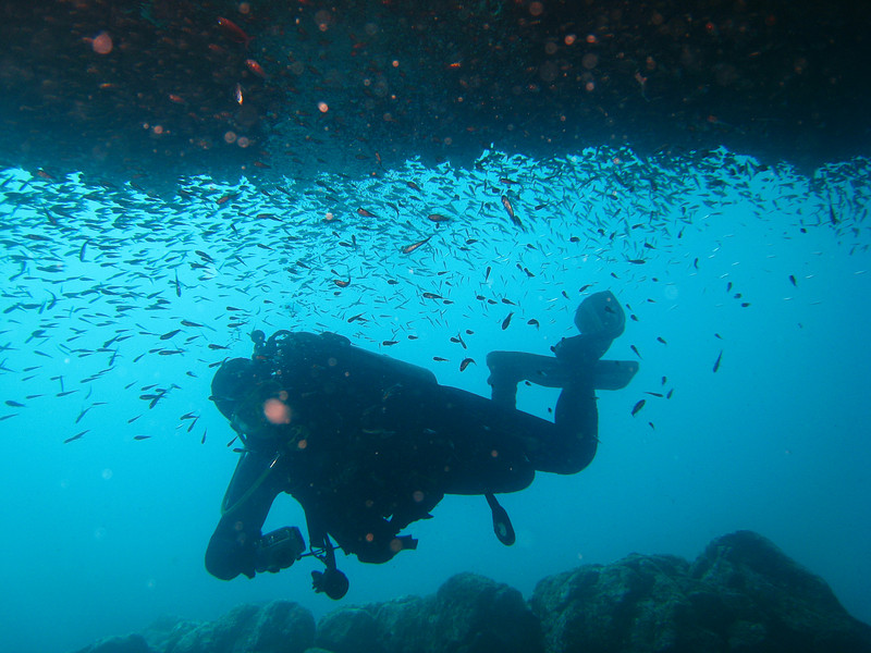 Diving in the Galapagos (367 of 392)
