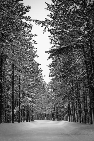 Winter Road jan27-8-Edit-Edit-Edit.jpg