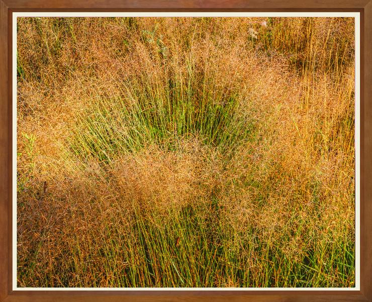 JW 5717 GRASSES WIDE FRAME.jpg