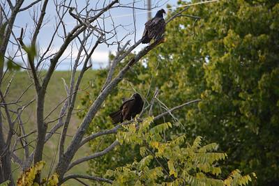 Niagara Region Conservation Areas 2014