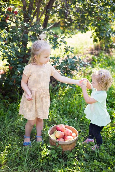 Apple Orchard 2018