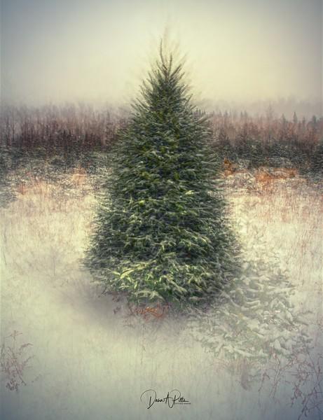 Christmas Tree Farm PVS HD
