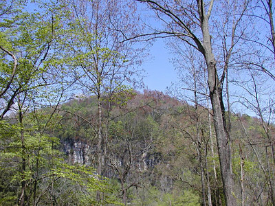 Top of Lovely Bluff viewd from Savage Rock Garden Caryville, TN  April 28, 2007