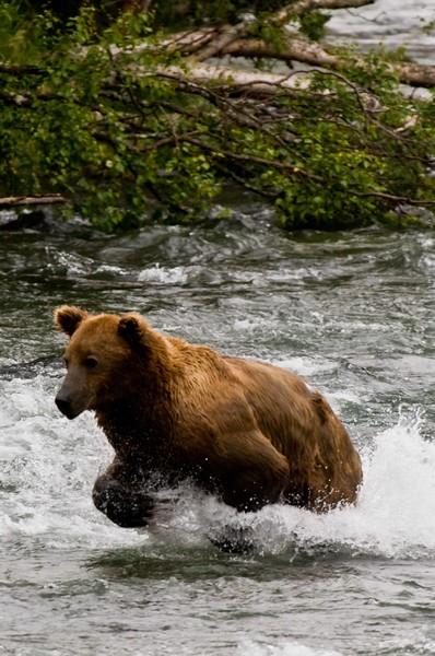 Running Bear.jpg